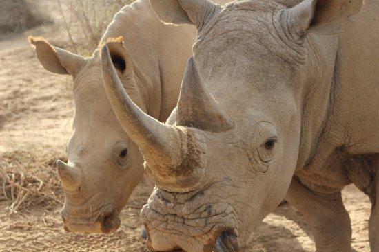 Sanbona Wildlife Reserve: photo9.jpg