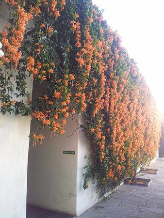 Salta Cabildo: Hermoso adorno natural en su patio