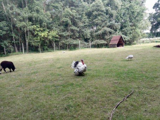 LandPark Lauenbrueck