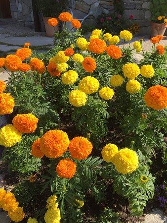Issengo, Italien: Fiori giardino!