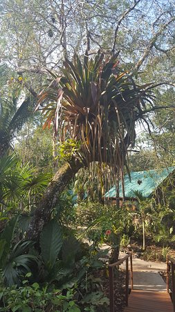 San Antonio, Belize : MJL- Pathway to our cabana