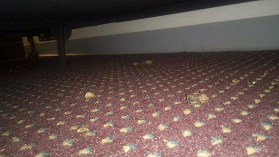 Southern Oaks Inn: poo under bed
