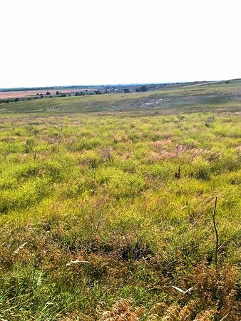 Santa Fe Trail Tracks: Trail ruts in the distance
