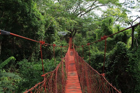 The Treehouse : El puente