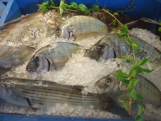 Agios Prokopios, กรีซ: Today's Catch