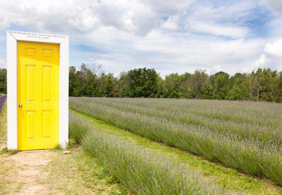 Terre Bleu Lavender Farm the yellow door & the yellow door - Picture of Terre Bleu Lavender Farm Milton ...