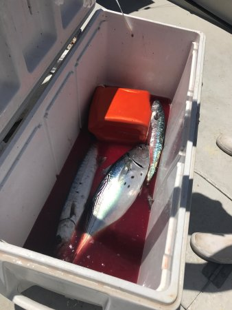 Ham'r Time Sport Fishing Charters