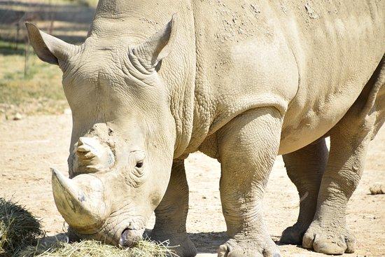 Peoria Zoo : Rhinoceros
