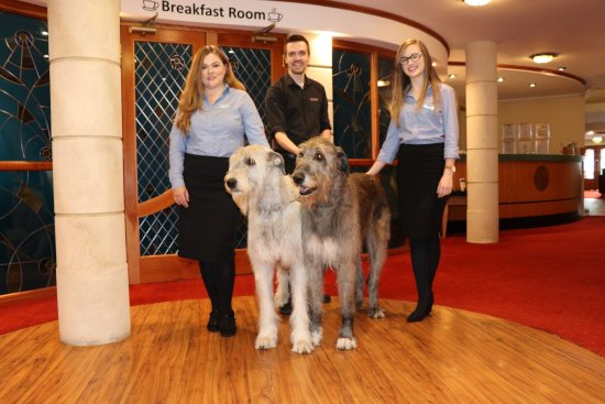 Inn on the Coast: Irish Wolfhounds Juno & Grace with Debbie Danielle and Darren