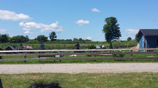 Forsythe Family Farms