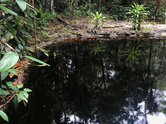 写真アマゾン エコパーク ジャングル ロッジ枚