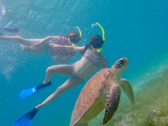 St.Thomas Scuba and Snorkel Adventures: Great picture Web took of my daughters with a turtle!