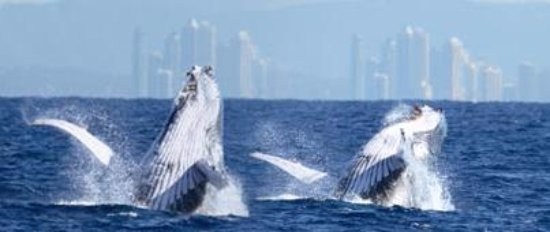 Duranbah, Australia: Whale watching from the coast