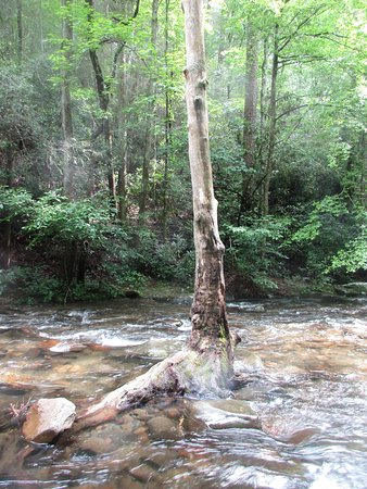 Chatsworth, GA: a tree in the creek