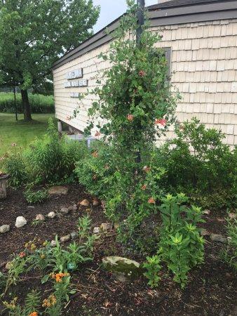 Seneca Falls, NY: Flower garden