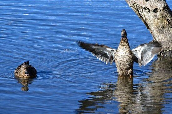 Woy Woy, أستراليا: Birds are active
