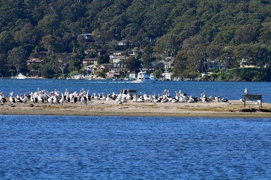 Woy Woy, أستراليا: Pelican Island