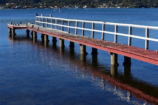 Woy Woy, Australia: Popular for birds too