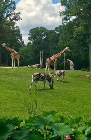 North Carolina Zoo: Africa side was amazing!  Lions had a pretty amazing exhibit, and the Giraffes were probably in