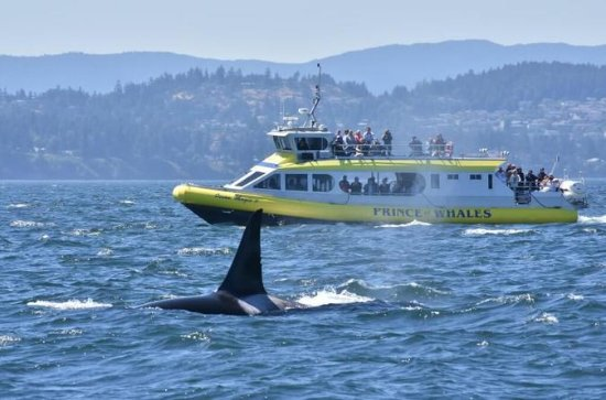 Half-Day Whale Watching Adventure...
