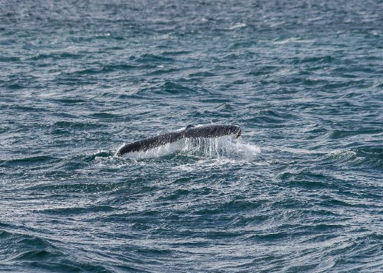 Wildlife Coast Cruises: Whale Tail - Westernport Bay