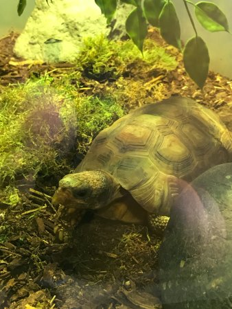 Point Defiance Zoo & Aquarium: Tortoise