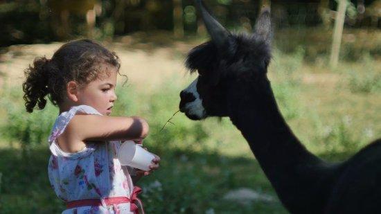 La Maison des Chameaux: Nourrir les animaux