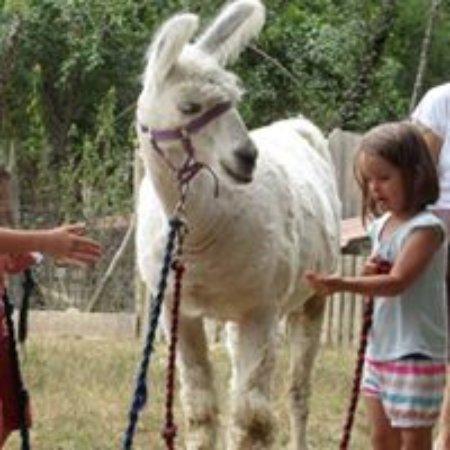 Castelnau-Riviere-Basse, France: Donner à manger aux animaux