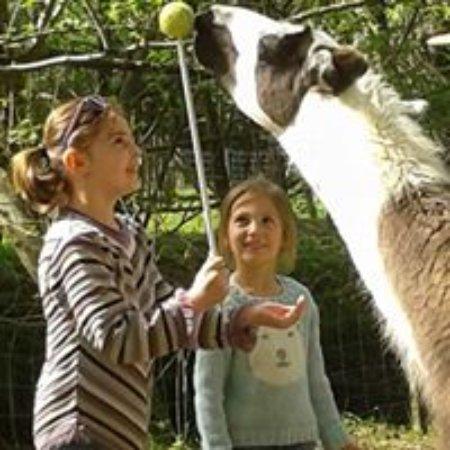 Castelnau-Riviere-Basse, France:  Dresser un alpaga