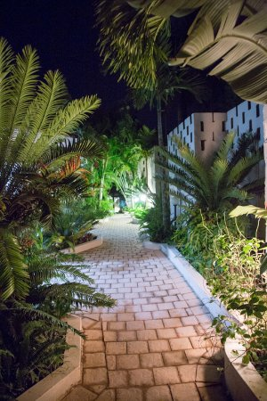 St. Lucia Safari Lodge: Walkway and Cycads