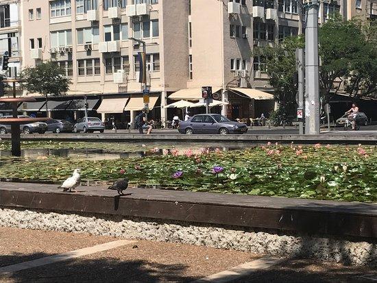 Jaffa Slope Park: photo0.jpg