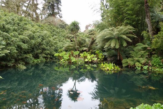 St Austell, UK: Tropical Pond