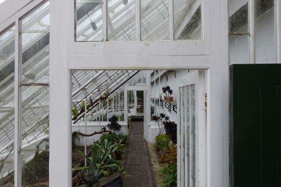 St Austell, UK: Wunderschönes Gewächshaus