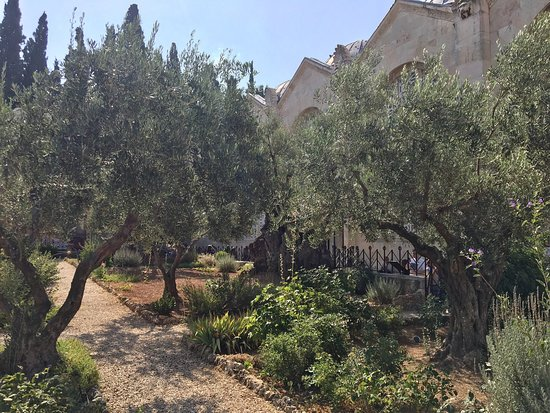 Garden of Gethsemane: photo0.jpg