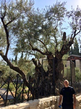 Garden of Gethsemane: photo1.jpg