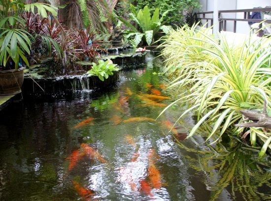 Hotel La Villa : Pond with coy carp