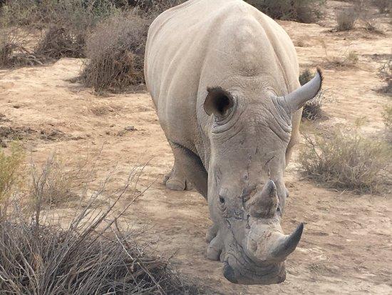 Sanbona Wildlife Reserve: photo1.jpg