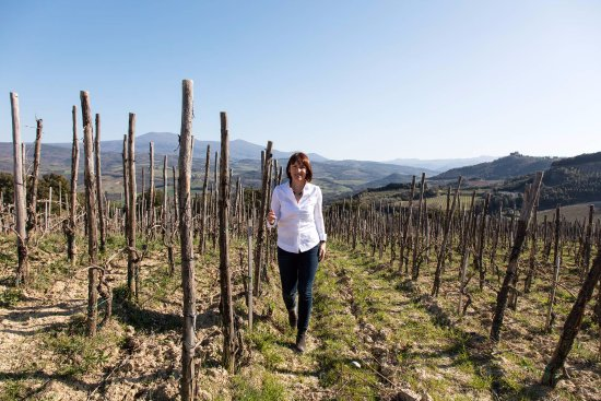 Montalcino, Italy: Walking through Brunello vineyards in the morning
