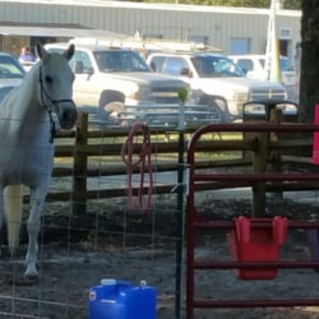 Brooksville, FL: One of the horses at the Horse Rescue
