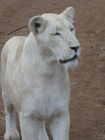 Elandela Private Game Reserve Image