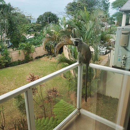 Ridgesea guest house bewertungen fotos preisvergleich for On our balcony