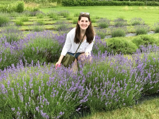 Skaneateles, Νέα Υόρκη: Daughter #1 picking Lavender