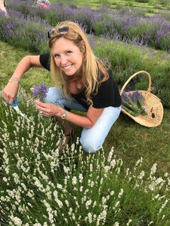 Skaneateles, Νέα Υόρκη: Wife picking Lavender