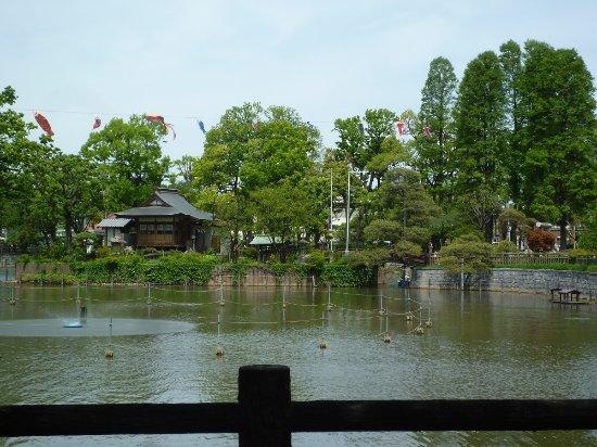Himonya Park: 碑文谷公園 弁天池