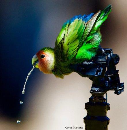 Batis Birding Safaris and Day Tours