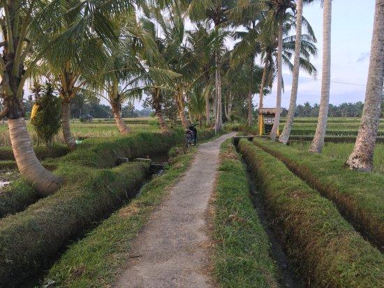 Nirwa Ubud Homestay: Rice fields walk just couple minutes from homestay