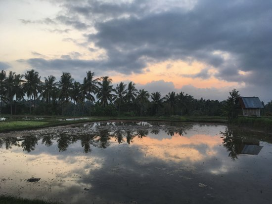 Nirwa Ubud Homestay: Rice fields walk just couple minutes from homestay
