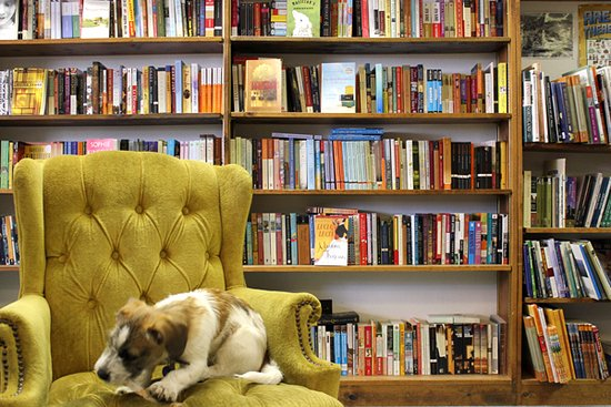 Excelsior, MN: Did I mention this bookstore is dog friendly? Here is a shot inside the store.
