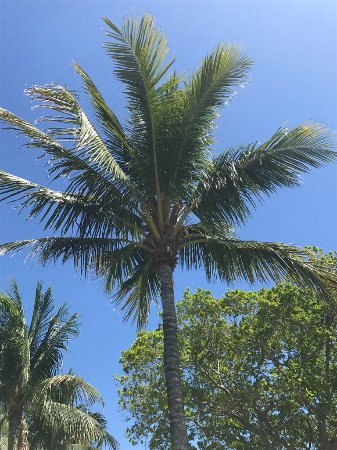 Bicentennial Park, Lantana, Florida: Palm Tree May 2017