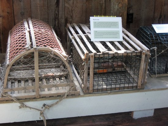 บาธ, เมน: part of lobster cage display